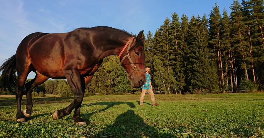Šlonský kůň neboli šlonzák – co je to za plemeno?