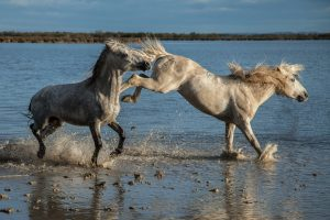 Základy chování koní ve stádě
