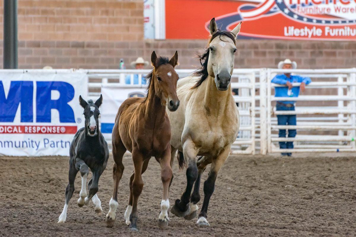 Křivost koní