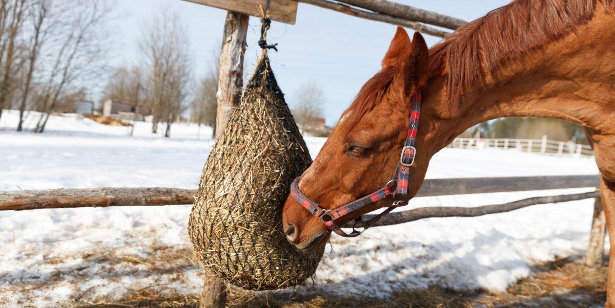 Sítě na seno pro koně – jak je plnit snadno a rychle?
