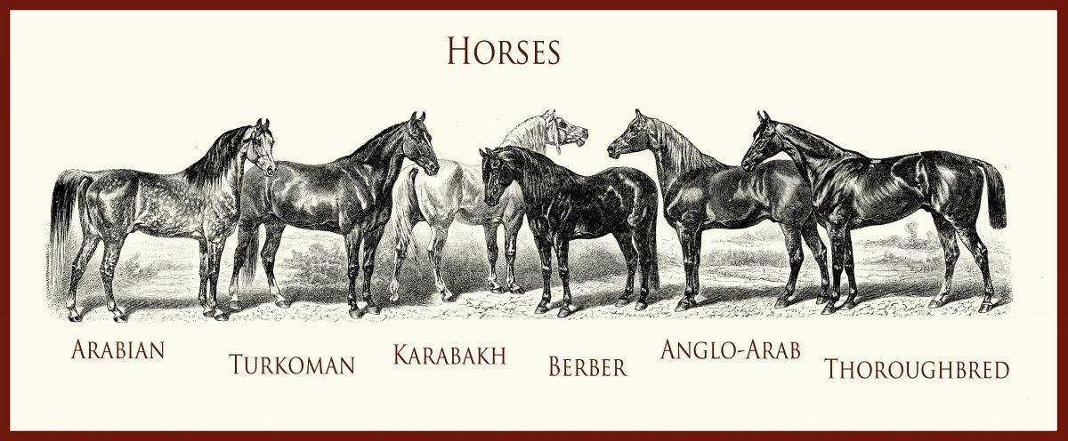 Karabašský kůň (Karabakh horse) – zlatí koně z Karabachu