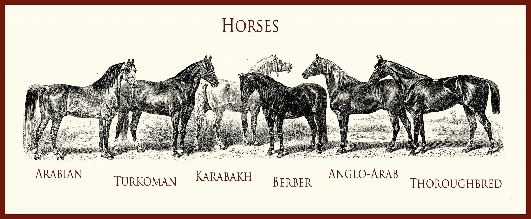 Skupina orientálních koní