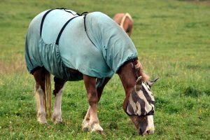 kůň muchař