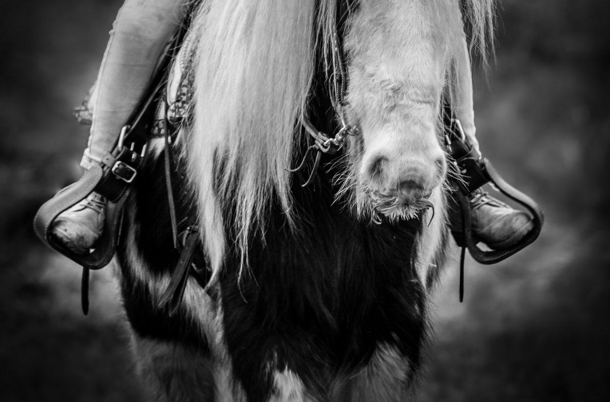 Focení s koňmi – Bára Pospíšilová